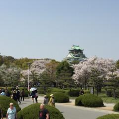 お花見 大阪城