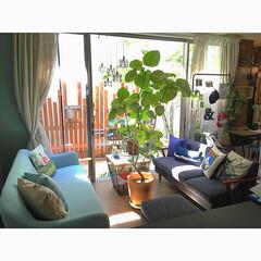 セルフリノベーション/ダイニング/暮らし/グリーン/観葉植物/Noceソファー/... 水色が可愛いニトリのソファーをダイニング…