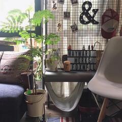 イームズチェア/パーテーション/イケア/観葉植物/緑のある暮らし/グリーンのある暮らし/... おはようございます! 朝から雨模様の金曜…