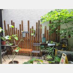 光庭/グリーン/ガーデニング/観葉植物/グリーンのある暮らし/暮らし/... おはようございます。 近畿地方も梅雨入り…