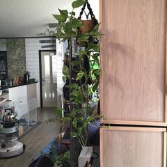 本棚/すっきり暮らしたい/Living/リビング/グリーンのある暮らし/インテリアグリーン/... こんにちは。 久しぶりに貼って剥がせるリ…