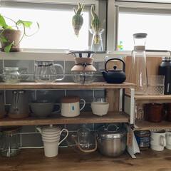 水耕栽培 水栽培 花瓶 ガラス 多肉植物 おしゃれ 北欧 ヒヤシンス サボテン 花器 KINTO アクアカルチャーベース S 80mm キントー(花瓶、花器)を使ったクチコミ「おはようございます。 じめじめと暑い日が…」