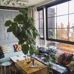 マイホーム/注文住宅/模様替え/リビング/暮らしを楽しむ/観葉植物/... こんばんわ☆ 今年初のdiyはリビングの…