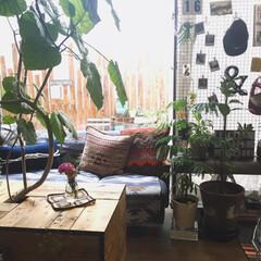 マイホーム/カフェ風インテリア/Flower/花/bloomeelife/ニトリ/... こんばんわ☆ 年末でバタバタと忙しい毎日…