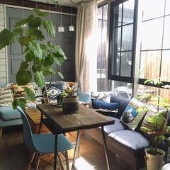 マイホーム/注文住宅/窓枠リメイク/お花/観葉植物/カリフォルニアテイスト/... お花のある暮らし。 切り花もいいけれど鉢…