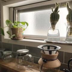 水耕栽培 水栽培 花瓶 ガラス 多肉植物 おしゃれ 北欧 ヒヤシンス サボテン 花器 KINTO アクアカルチャーベース S 80mm キントー(花瓶、花器)を使ったクチコミ「おはようございます。 じめじめと暑い日が…」(2枚目)