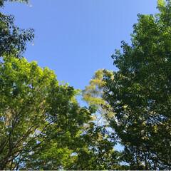 新緑の季節/新緑/薔薇/公園/春のフォト投稿キャンペーン/ありがとう平成/... 藤の花を見に行った後、公園へ。 梅、桜の…(4枚目)