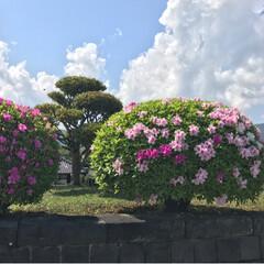 ツツジ/藤/春のフォト投稿キャンペーン/ありがとう平成/令和の一枚/GW/... 今日も母と妹と一緒に藤の花を見に行ってき…(7枚目)