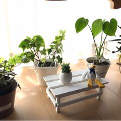 窓際の風景/お気に入り/グリーン/ハーバリューム/ミモザ/カーネーション/... 窓際の風景 お花とグリーンとハーバリュウ…(3枚目)
