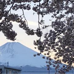 夕暮れ/標本木/富士山/桜/平成最後の一枚/春のフォト投稿キャンペーン/... 自宅近くでのお花見🌸の後お買い物へ行くつ…