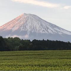 富士山と茶畑/富士山/大渕笹場/茶畑/春のフォト投稿キャンペーン/ありがとう平成/... 今日のおでかけのシメは、富士山🗻と茶畑🌱…(3枚目)