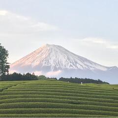 富士山と茶畑/富士山/大渕笹場/茶畑/春のフォト投稿キャンペーン/ありがとう平成/... 今日のおでかけのシメは、富士山🗻と茶畑🌱…