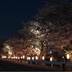 龍巌淵/ライトアップ/夜桜/桜🌸/春のフォト投稿キャンペーン/LIMIAおでかけ部/... 桜づくしの1日のシメは、 富士市の龍巌淵…