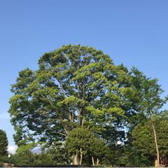 新緑の季節/新緑/薔薇/公園/春のフォト投稿キャンペーン/ありがとう平成/... 藤の花を見に行った後、公園へ。 梅、桜の…(3枚目)
