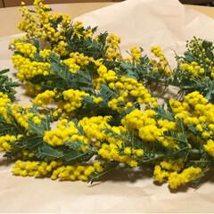 ミモザ/ミモザイエロー/ハンドメイド 何軒かのお花屋さんを巡り、今日やっと見つ…