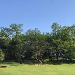 新緑の季節/新緑/薔薇/公園/春のフォト投稿キャンペーン/ありがとう平成/... 藤の花を見に行った後、公園へ。 梅、桜の…(2枚目)