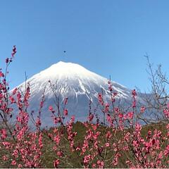 気温上昇/富士山🗻/梅園/おでかけ/風景 今日は家内の気温上昇☀️ ポカポカ陽気を…