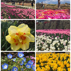 吉田公園/富士山🗻/晴天/春の花々/チューリップ祭🌷/LIMIAおでかけ部/... 今日は京都旅行のお土産を届けに妹のお家🏠…