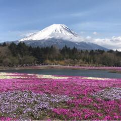 富士山/芝桜/富士芝桜まつり/春のフォト投稿キャンペーン/ありがとう平成/令和の一枚/... 夜勤明けでお疲れMAXでしたが、久しぶり…