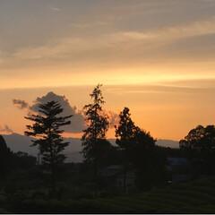 富士山と茶畑/富士山/大渕笹場/茶畑/春のフォト投稿キャンペーン/ありがとう平成/... 今日のおでかけのシメは、富士山🗻と茶畑🌱…(5枚目)