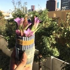 日向ぼっこ/午後の一枚/良い天気/花のある暮らし/リンドウ/お花/... リンドウちゃんのお気に入り🌿 LIMIA…