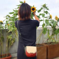 お出かけ/いい天気/ひまわり/元気の源/向日葵/お花/... 急に冬の寒さになって来てなんだか寂しい😢…