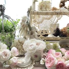 クリスティアーナ/薔薇が好き/バラ/ばら/ばらが咲いた/にわ/... クリスティアーナ🌹 今はもっと咲いていま…(6枚目)