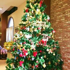 リミアの冬暮らし もう、街はクリスマス