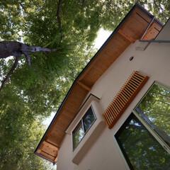木の家/杉/自然素材/和風/準防火地域/丸太/... 参道の家。 準防火地域でも、工夫をすれば…