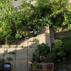 雑木の庭/石のテラス/ギボウシ/ヤマボウシ/石張り 石のテラスを囲む雑木の庭 春の芽出し、夏…