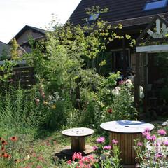 花の庭/イングリッシュガーデン/アーチ エキナセア、モナルダ、フロックス、色とり…