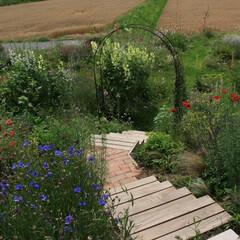 花の庭/イングリッシュガーデン/アーチ 階段上から眺める宿根草ガーデン。花々を上…