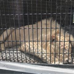今日も頑張る/ありがとう/釣り堀/ホワイトライオン/動物園 日曜日は、動物園へ 弟2人も連れて行きま…