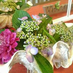 あじさい/アジサイ/紫陽花/貝殻/雑貨/花 でっかい貝殻をいただいたので、ミニあじさ…