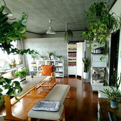 植物/ポリプロピレン収納/MUJI/無印良品/住まい 無印良品 リビングでもダイニングでも使え…