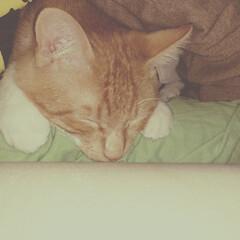 ペット 腕枕大好き♪ 甘えん坊の男の子(*´꒳`…(1枚目)