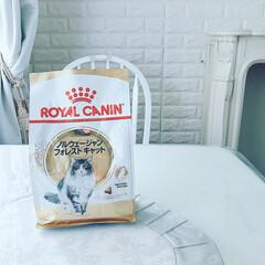 ロイヤルカナン FBN ノルウェージャンフォレストキャット 成猫用 2kg(その他キッチン、日用品、文具)を使ったクチコミ「🐈 ・ カリカリを食べなので #ロイヤル…」