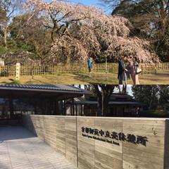 新生活/暮らし 気分転換に京都御所に行ってきました。休憩…