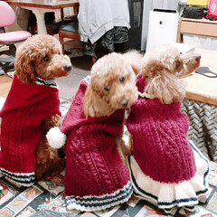 手編み/スカート/パーカー/セーター/わんちゃん/寒さ対策/... 寒くなってきたので、わんちゃんたちも寒さ…
