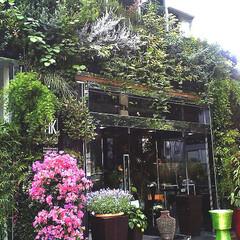 庭/ガーデニング/観葉植物/ナチュラル/装飾/デコラティブ SHOPの緑化。効果的なアイキャッチとな…