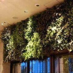 庭/ガーデニング/観葉植物/ナチュラル/装飾/デコラティブ インテリアの壁面緑化。象徴的なインパクト…