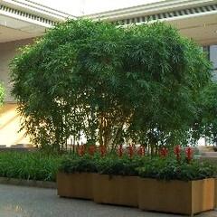 庭/ガーデニング/観葉植物/ナチュラル/装飾/デコラティブ パブリックスペースの緑化。癒し効果が期待…