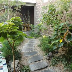 庭/ガーデニング/観葉植物/ナチュラル/装飾/デコラティブ/... 飛び石のある庭園。両脇の樹木も樹種や形を…