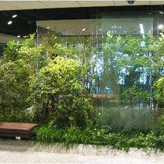 庭/ガーデニング/観葉植物/ナチュラル/装飾/デコラティブ 室内緑化。樹木も配置のデザインで雰囲気を…