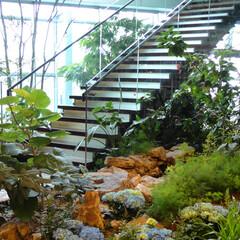 庭/ガーデニング/観葉植物/ナチュラル/装飾/デコラティブ/... 屋内の緑化。階段と通路の空間を生かした植…