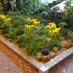 庭/ガーデニング/観葉植物/ナチュラル/装飾/デコラティブ/... 花壇部分。季節感を大切にチューリップを植…