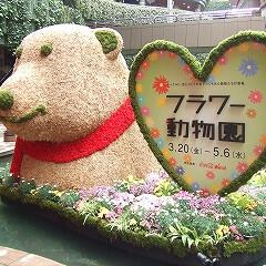 庭/ガーデニング/生花/ナチュラル/装飾/デコラティブ/... 看板と一緒のお花のクマ。足元のお花も華や…