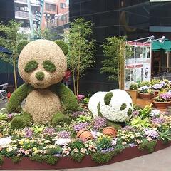 庭/ガーデニング/生花/ナチュラル/装飾/デコラティブ/... 一番人気のお花のパンダ。生花の柔らかな質…