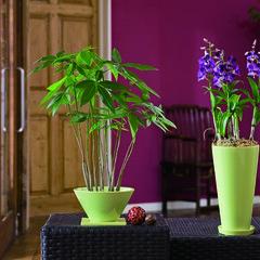 シンボル/エキゾチック/ダイナミック/オリエンタル/天然 庭をつくる植物。このような場所にストック…