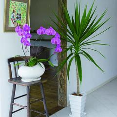 ワイルド/エキゾチック/ダイナミック/オリエンタル/天然 庭をつくる植物。このような場所にストック…